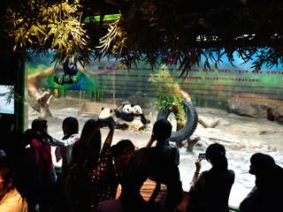 <广州长隆2日游>欢乐世界、野生动物世界、双长隆主题乐园 亲子系列
