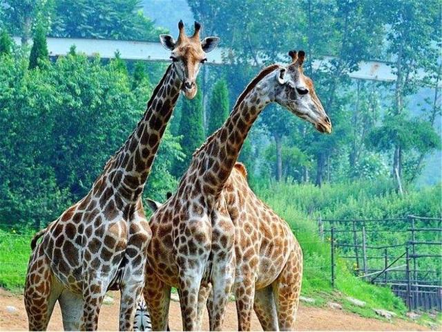 大连棒棰岛-老虎滩-森林动物园3日游>含2晚精选酒店