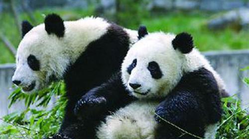 熊猫 2312b 电路图