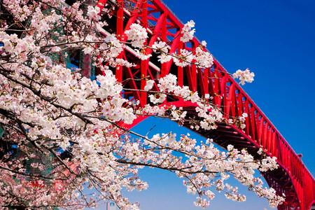 [单船票]<丽星邮轮处女星号上海-大阪-东京横滨港-富士山清水港-鹿儿岛-上海7晚8天> 每周四 上海往返 特色行程