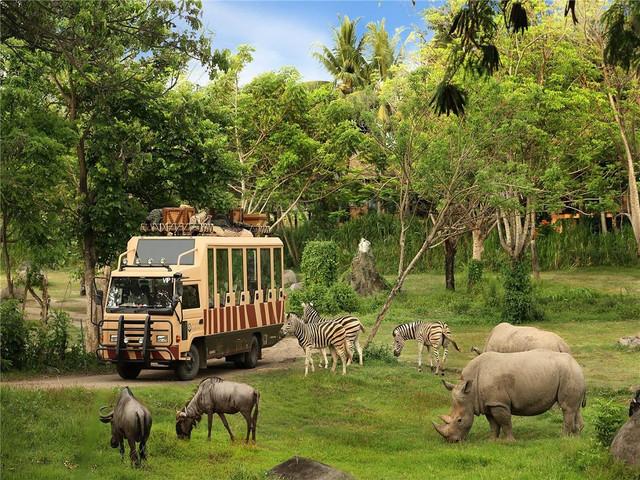 搭着游园车欣赏这些被保护的野生动物涵盖印度尼西亚,印度,非洲等地