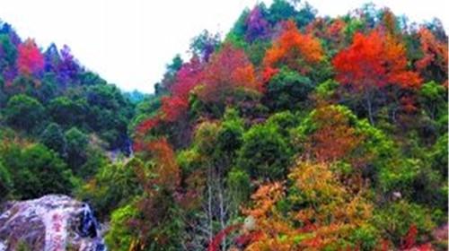 流溪河-云天海温泉-云髻山2日游>流溪河 温泉 枫叶图片