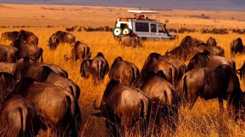 肯尼亚动物大迁徙非洲狂野体验之旅11日游>绝佳拍摄大迁徙地点 马赛