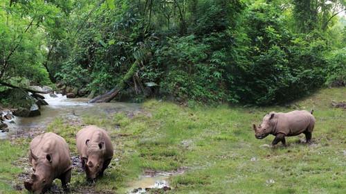森林茂密,一片亚热带雨林风光,黑熊,野牛,绿孔雀,猕猴等保护ag游戏直营网 平台都在