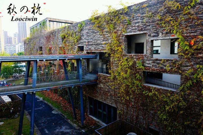 因为一片枫叶而爱上深秋的杭州