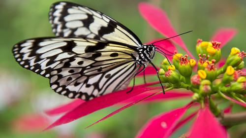 蝴蝶闺蜜头像三张手绘