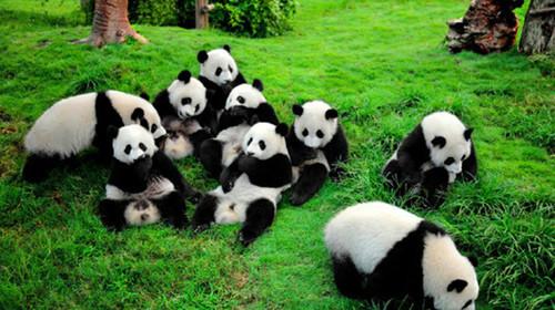 韩系背景可爱熊猫