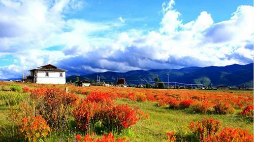 香格里拉小中甸_d7                         香格里拉出发  沿途欣赏小中甸高原牧场