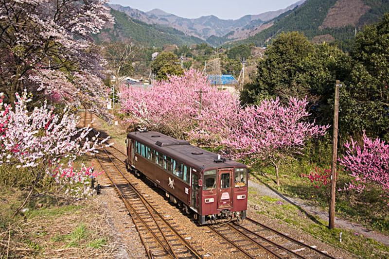 日本群马县在*近几年上了日本的密境排行榜,有时间的话可以做个群马深度游。群马受太平洋气候的影响,夏季雨多雷频繁,但冬天几乎不下雨,刮干燥的强风,温度会降至零下10度左右。北部的多山地区冬季雨雪多。所以郡马旅游*的季节是春季,3至5月份是*的月份。这时可以到秋名山看纷飞的樱花,,置身于只有漫画中才有的美景,感受*亲近的自然。群马的旅游景点有高崎山自然动物园,动物园里有很多的猴子,另人惊奇的是这里的猴子都很守规律。  日本群马县在*近几年上了日本的密境排行榜,有时间的话可以做个群马深度游。群马受太平洋气候的影