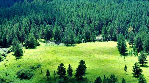 莫尔道嘎森林公园位于大兴安岭林区腹地,是我国面积最大的森林公园,以图片