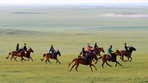 壁纸 草原 动物 马 骑马 桌面 500_280