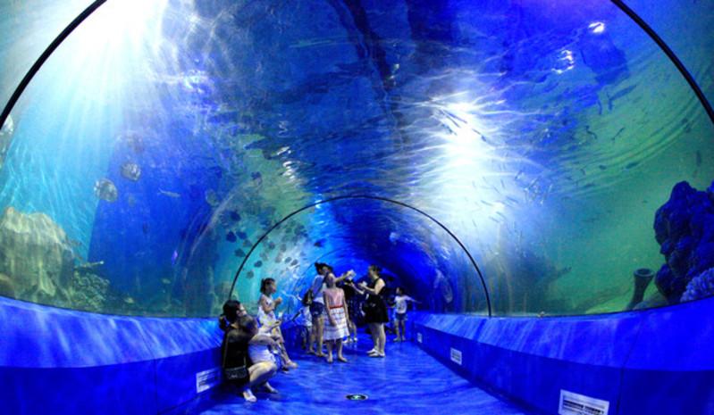 鲨鱼湾海底隧道,珊瑚礁海底隧道,多彩精品水族展区,十二生肖鱼展区