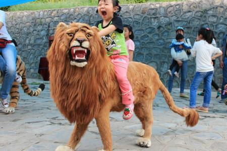 西安-兵马俑-华清宫-秦岭野生动物园-陕历博-西安城墙4日跟团游>亲子