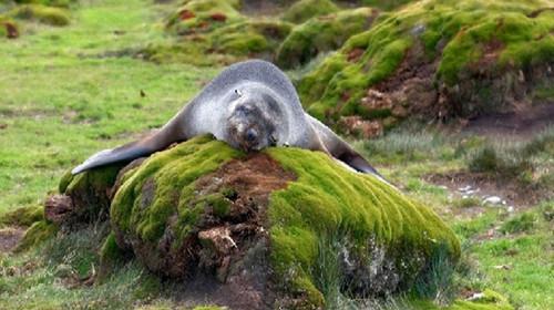 南极有什么动物和植物