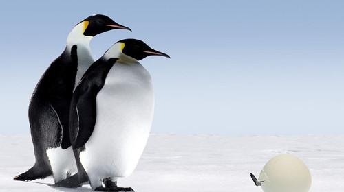 南极ft-y型台扇电路图