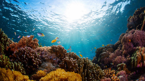 蓝梦岛diving1