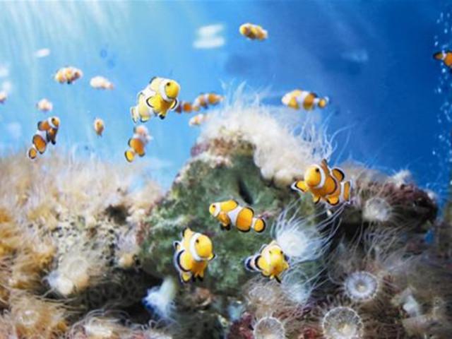 【海底潜水】<芽庄绿星潜水中心一日游>潜水1次/2次可选
