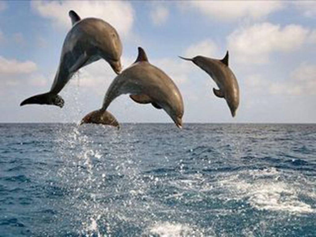 海豚的祖先是什么动物