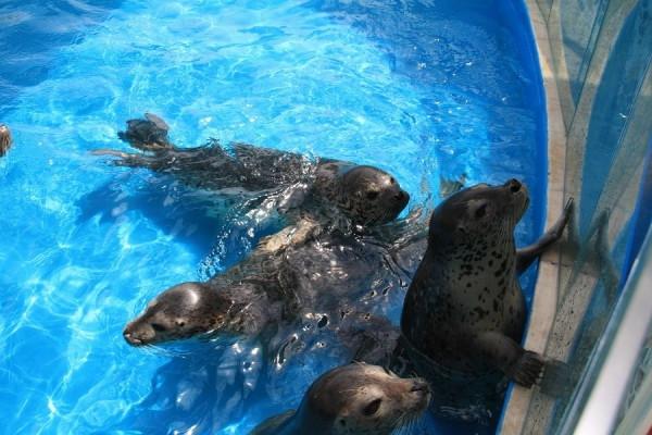 """公园内建有""""浓缩极地世界,展现海洋奇观""""的极地海洋动物馆,海兽馆."""