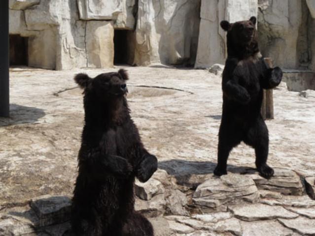 沈阳森林动物园旅游巴士1日游>合家欢乐看动物,亲子游