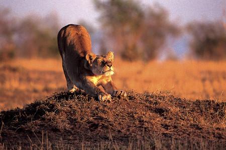 <埃塞俄比亚-纳米比亚-博茨瓦纳-赞比亚-津巴布韦机票+当地18日游游>红沙漠越野,维多利亚瀑布,乔贝,2晚三角洲营地,可安排全国联运