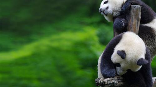 成都-九寨沟-黄龙风景名胜区双飞6日游>晚出发 错峰出游 赠熊猫乐园