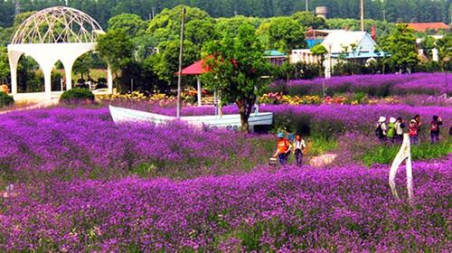 东平国家森林公园-紫海鹭缘浪漫爱情主题公园自驾2日游>宿北湖湾度假图片