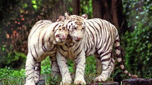 广州长隆野生动物世界特惠1日游>亲子套票立减180元