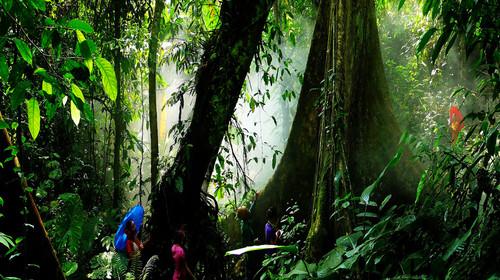 景区以其特有的热带原始森林景观和数量较多的野生亚洲象而著称于世.图片