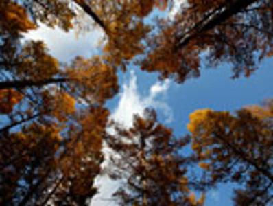 【2019】福州山森林公园v攻略攻略_苏木山攻略苏木到成都自助游森林图片