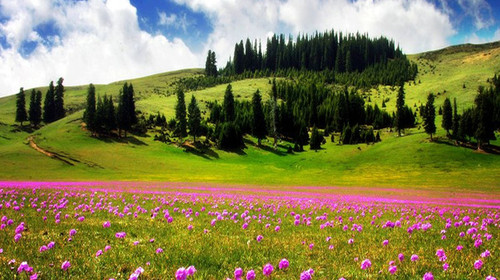 新疆伊犁那拉提草原1日游