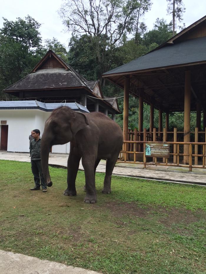 壁纸 大象 动物 700_933 竖版 竖屏 手机