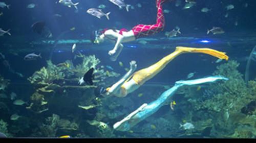 壁纸 动物 海底 海底世界 海洋馆 水族馆 鱼 鱼类 500_280