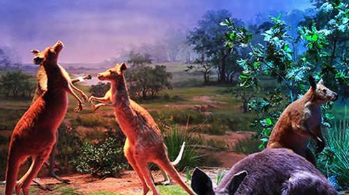 """横店圆明新园皇家动物乐园是中国野生动物保护协会批准的""""全国野生"""