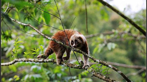 版纳边境印象-普洱国家森林公园-打洛小镇-傣族村寨