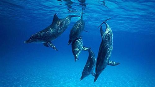 澳大利亚-新西兰12日游>海豚岛, 蓝色海洋路,普芬蒸汽小火车,直升