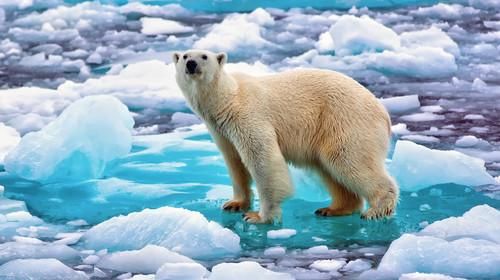 漫游三岛探秘北极18日游>追寻北极熊 北极冰川峡湾 冰岛地热温泉