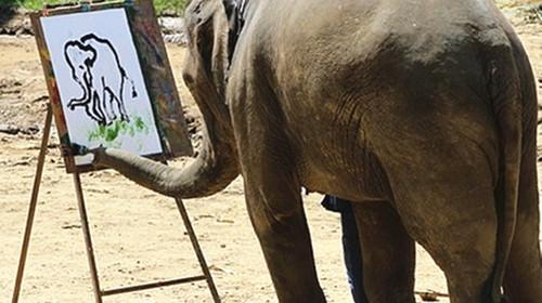 壁纸 大象 动物 500_280