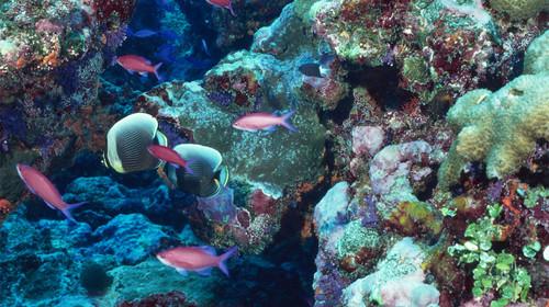 鼓浪屿海底世界拥有12项之最,其中有2项世界之最,10项全国之最.
