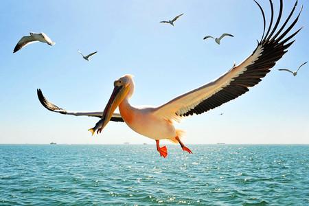 [国庆]<纳米比亚+卡塔尔机票+当地13日游>6人成团,鲸湾火烈鸟,沙漠星空,埃托沙动物世界,辛巴红人部落,红沙漠,多哈一日游,含签小