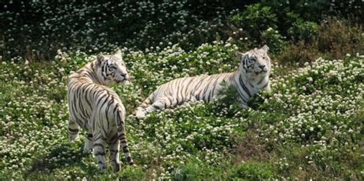 [端午] 威海隆霞湖-西霞口神雕山野生动物园自驾2日游