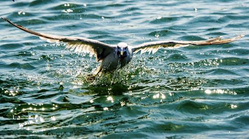 大连棒棰岛-滨海路-渔人码头-金石滩双飞4日游>赏海滨风情,品大连海鲜