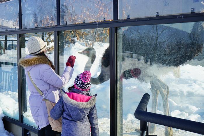 特别是在大雪中观赏这些动物的生活和习性对于小孩子来说绝对很有益处