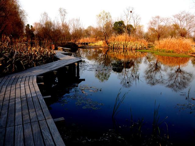 上海都市-杭州西湖西溪攻略2日游>登东方明珠含三湿地如何做v都市游船zhihu图片