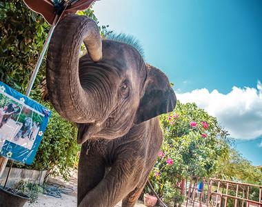 泰国曼谷-芭堤雅
