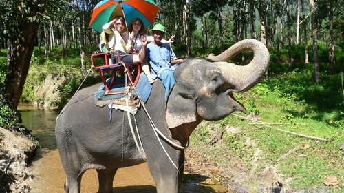 大象动物立体墙绘