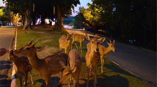 清迈4晚5日游>亲子游 夜间动物园 大象训练营
