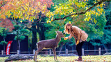 奈良神鹿公园