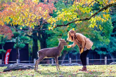 <日本京都周边游奈良公园一日游>大阪往返,一人成团,中文导游,游岚山,金阁寺,奈良公园,亲近大自然,喂梅花鹿(当地参团)