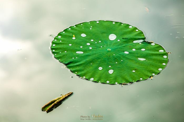 荷叶上滚起圆润的水珠就成了一道风景,池塘中的天地处处透着诗韵闲情.